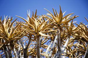 Namibia_001.jpg