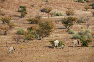 Namibia_005.jpg
