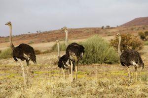 Namibia_013.jpg