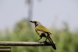 Namibia_014.jpg