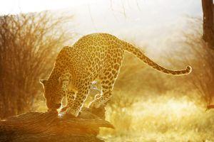 Namibia_016.jpg