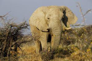 Namibia_017.jpg