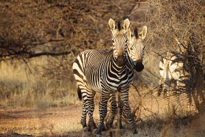 Namibia_018.jpg