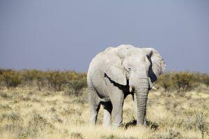 Namibia_022.jpg