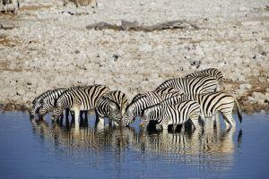 Namibia_026.jpg