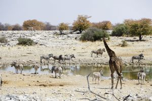 Namibia_027.jpg