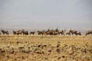 Namibia_029.jpg